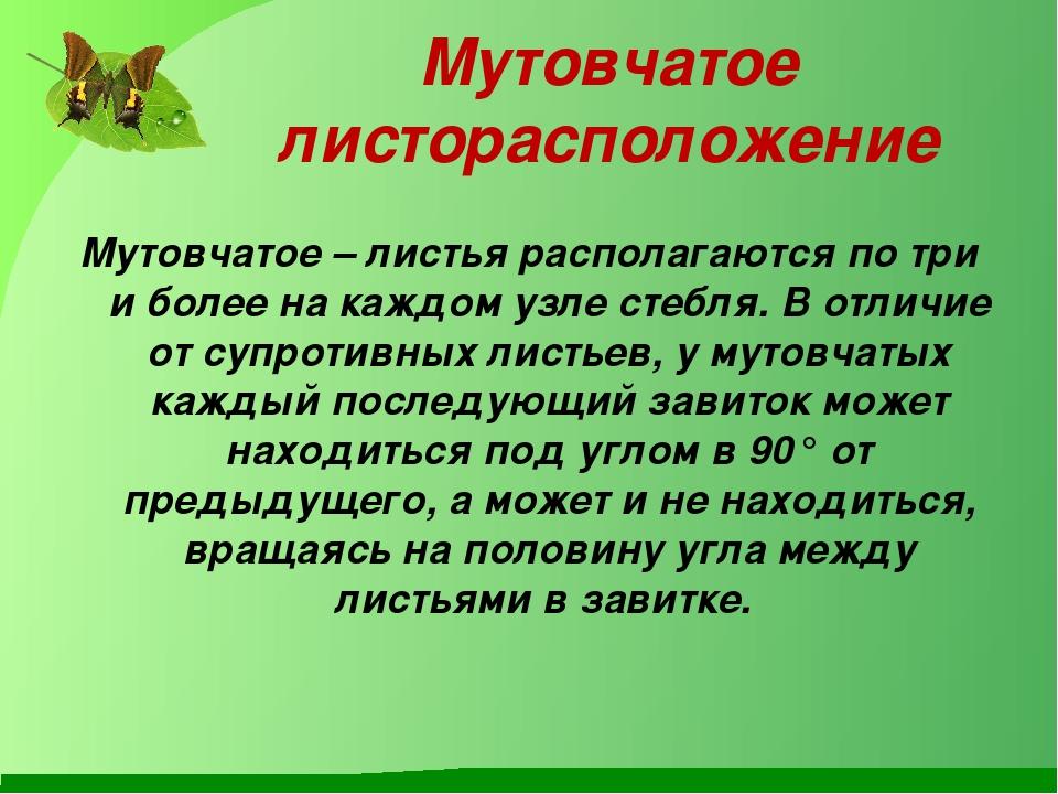 Мутовчатое листорасположение Мутовчатое–листья располагаются по три и более...