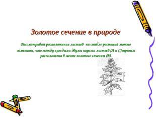 Золотое сечение в природе Рассматривая расположение листьев на стебле растени