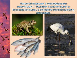 Питается водными и околоводными животными— мелкими позвоночными и беспозвоно
