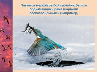 Питается мелкой рыбой (уклейка,бычок-подкаменщик), реже водными беспозвоночн