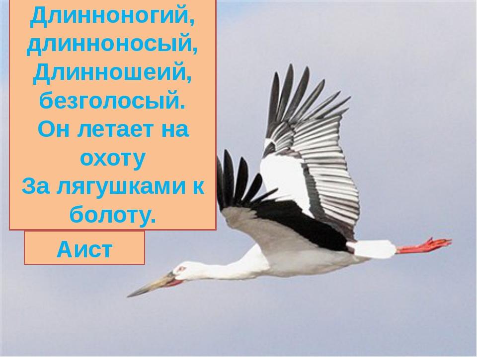 Длинноногий, длинноносый, Длинношеий, безголосый. Он летает на охоту За лягуш...