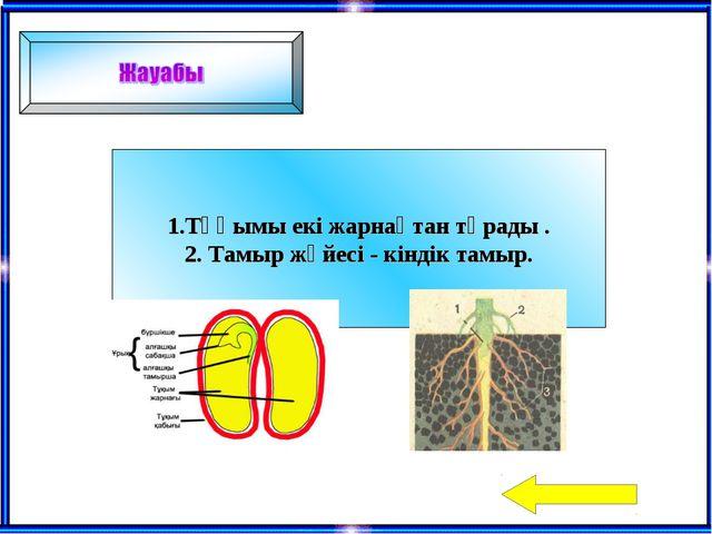 1.Тұқымы екі жарнақтан тұрады . 2. Тамыр жүйесі - кіндік тамыр.