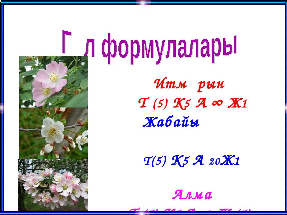 Итмұрын Т (5) К5 А ∞ Ж1 Жабайы алхоры Т(5) К5 А 20Ж1 Алма Т (5) К5 А ∞ Ж (5)