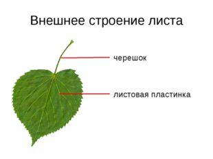 Очередное листорасположение Очередное листорасположение – от каждого узла сте