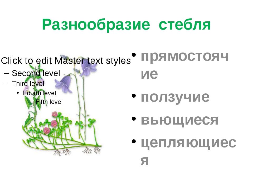 Разнообразие стебля прямостоячие ползучие вьющиеся цепляющиеся