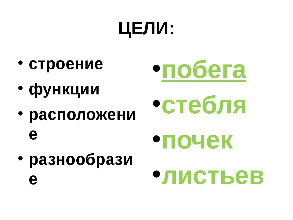 ЦЕЛИ: строение функции расположение разнообразие побега стебля почек листьев