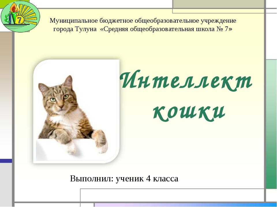 Интеллект кошки Выполнил: ученик 4 класса Муниципальное бюджетное общеобразов...