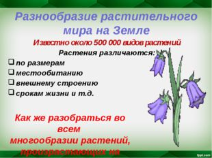 Разнообразие растительного мира на Земле Известно около 500 000 видов растени