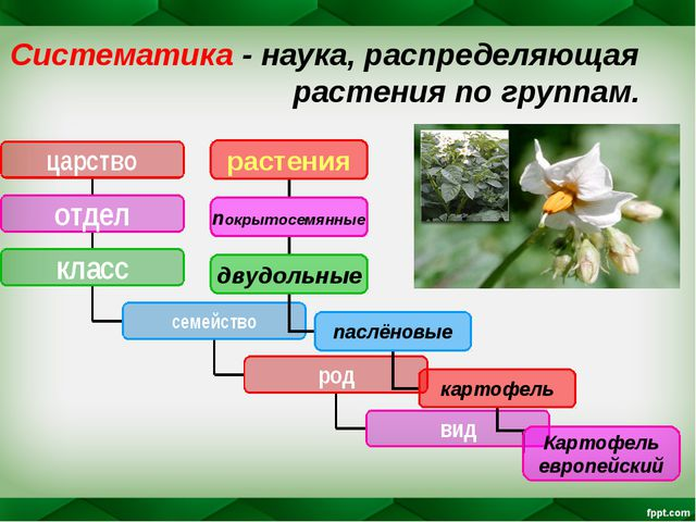 Систематика - наука, распределяющая растения по группам.