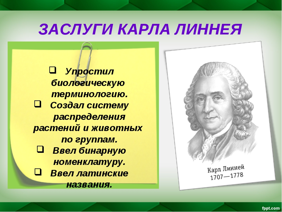 ЗАСЛУГИ КАРЛА ЛИННЕЯ Упростил биологическую терминологию. Создал систему расп...