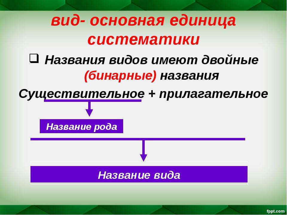 вид- основная единица систематики Названия видов имеют двойные (бинарные) наз...