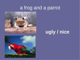 a frog and a parrot ugly / nice
