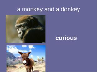 a monkey and a donkey curious
