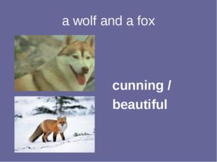 a wolf and a fox cunning / beautiful