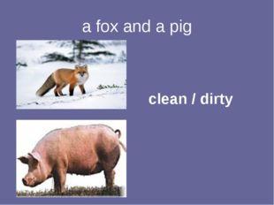 a fox and a pig clean / dirty