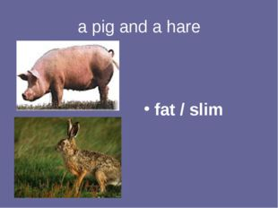 a pig and a hare fat / slim