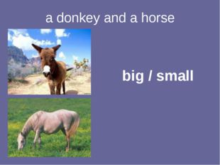 a donkey and a horse big / small