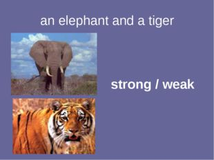 an elephant and a tiger strong / weak