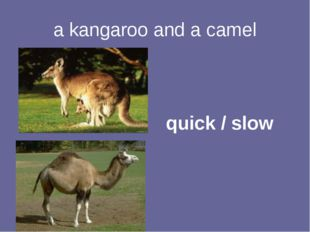 a kangaroo and a camel quick / slow