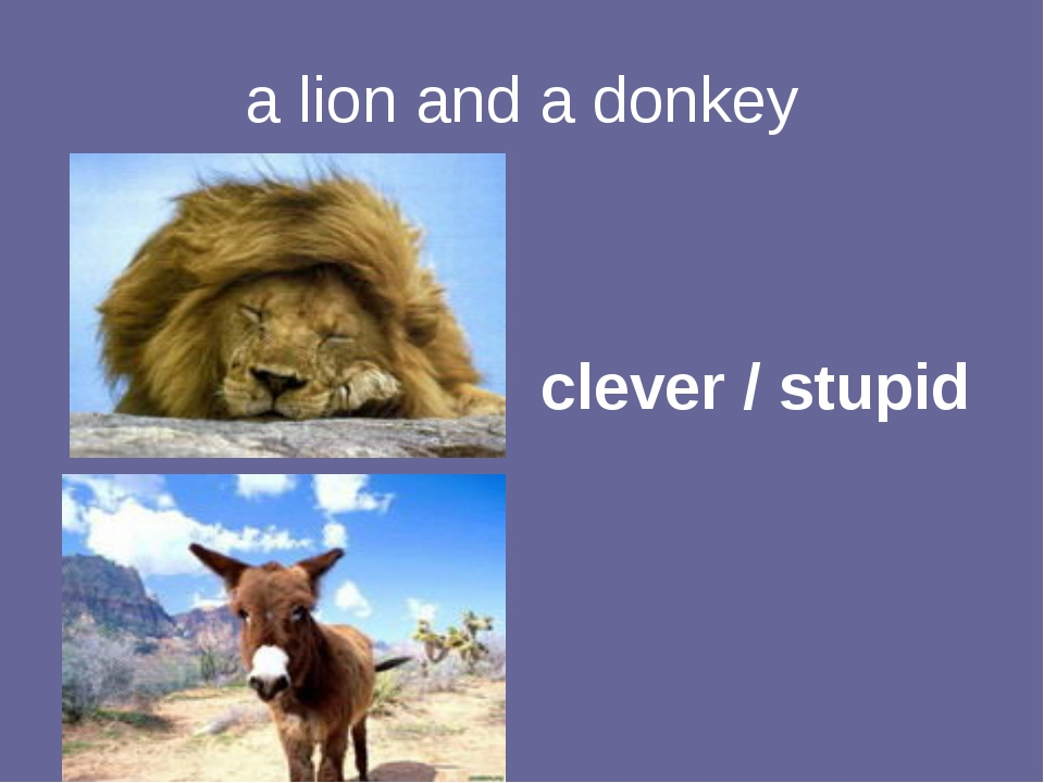a lion and a donkey clever / stupid