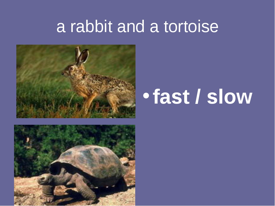 a rabbit and a tortoise fast / slow