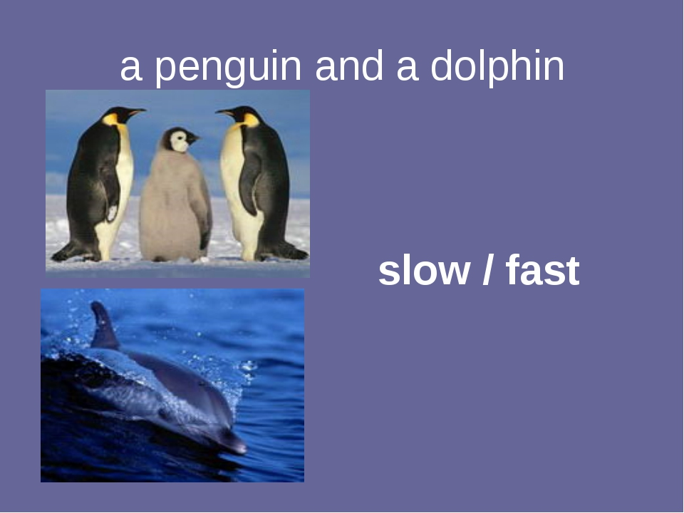 a penguin and a dolphin slow / fast