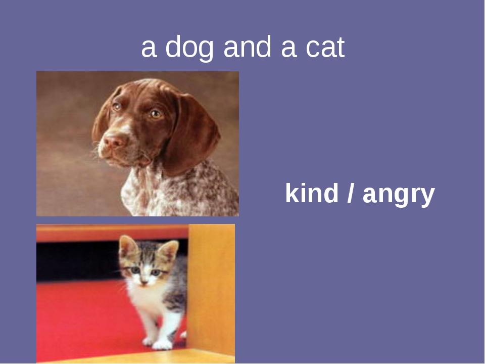 a dog and a cat kind / angry