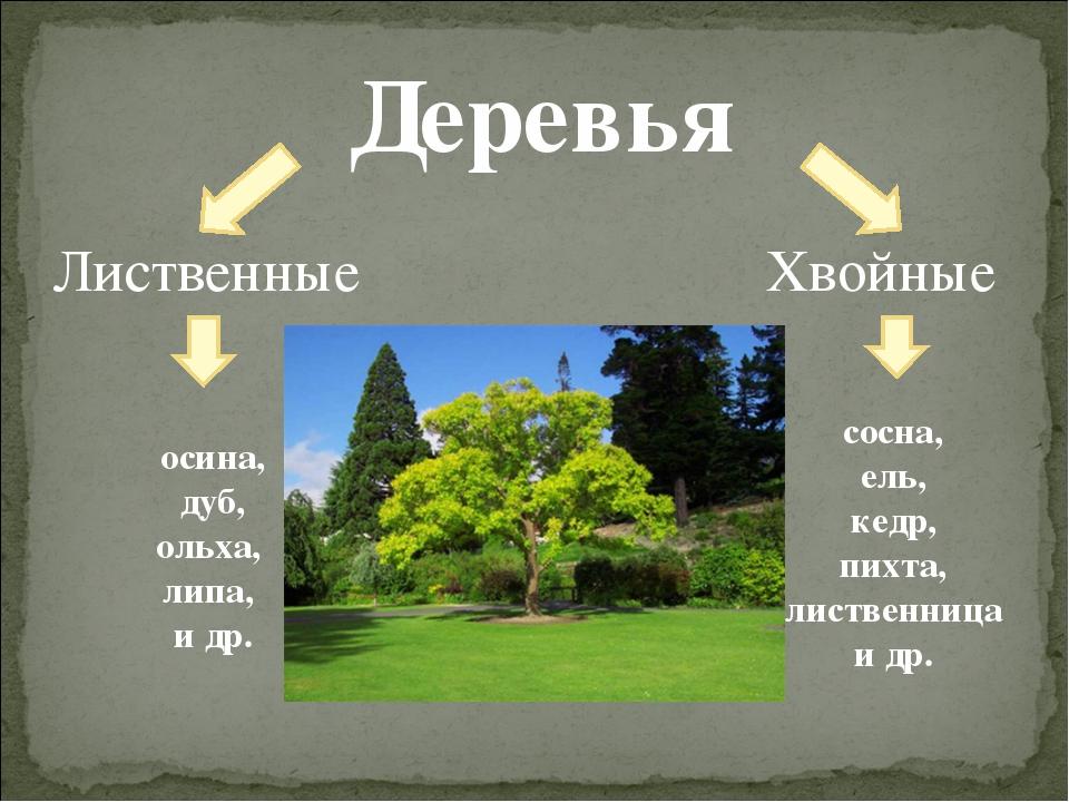 Деревья Лиственные Хвойные сосна, ель, кедр, пихта, лиственница и др. осина,...