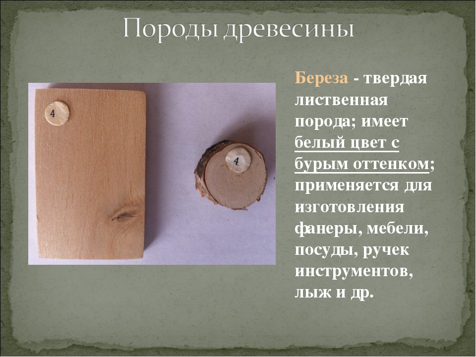 Береза - твердая лиственная порода; имеет белый цвет с бурым оттенком; примен...