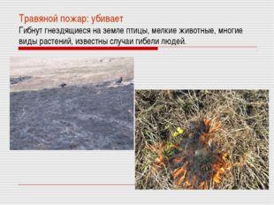 Травяной пожар: убивает Гибнут гнездящиеся на земле птицы, мелкие животные, м