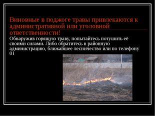 Виновные в поджоге травы привлекаются к административной или уголовной ответс