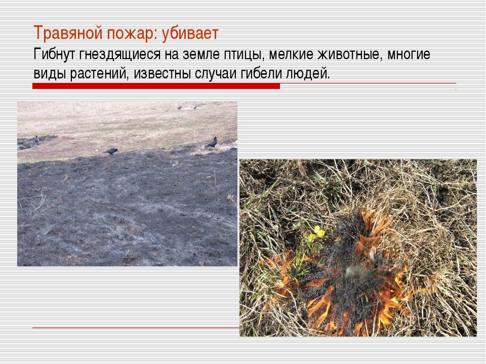 Травяной пожар: убивает Гибнут гнездящиеся на земле птицы, мелкие животные, м...