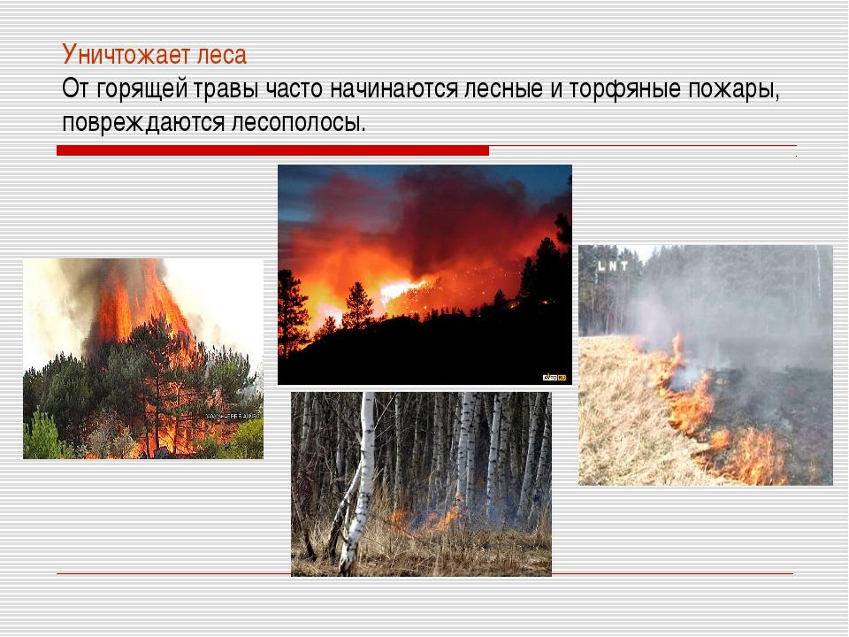 Уничтожает леса От горящей травы часто начинаются лесные и торфяные пожары, п...