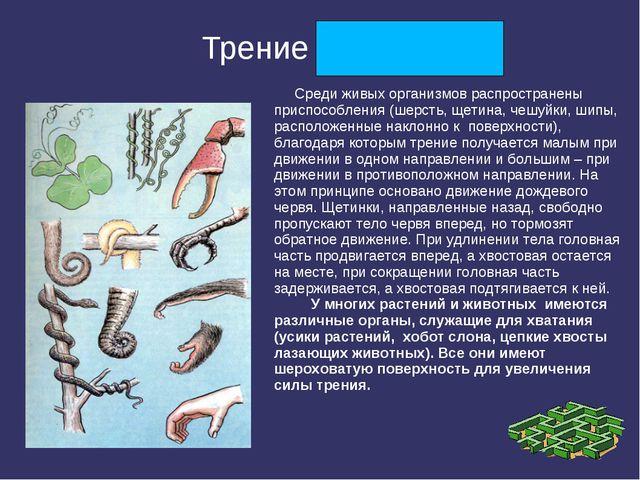Трение полезно Среди живых организмов распространены приспособления (шерсть,...