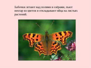 Бабочки летают над полями и озёрами, пьют нектар из цветов и откладывают яйца