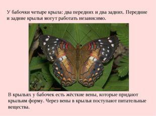 У бабочки четыре крыла: два передних и два задних. Передние и задние крылья м