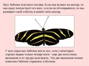 У всех взрослых бабочек шесть ног, хотя у некоторых хорошо видны только четыр