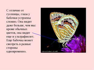С отличие от гусеницы, глаза у бабочки устроены сложно. Она видит даже больше