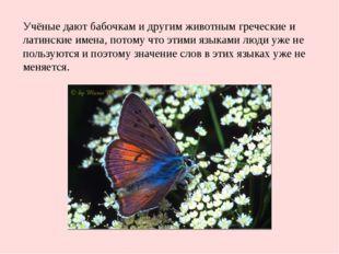Учёные дают бабочкам и другим животным греческие и латинские имена, потому чт