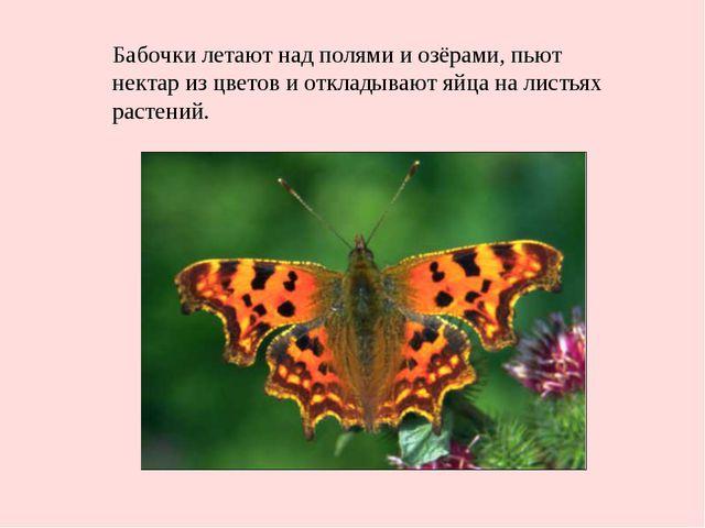 Бабочки летают над полями и озёрами, пьют нектар из цветов и откладывают яйца...