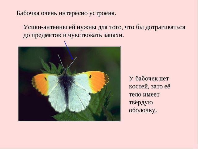 Бабочка очень интересно устроена. Усики-антенны ей нужны для того, что бы дот...