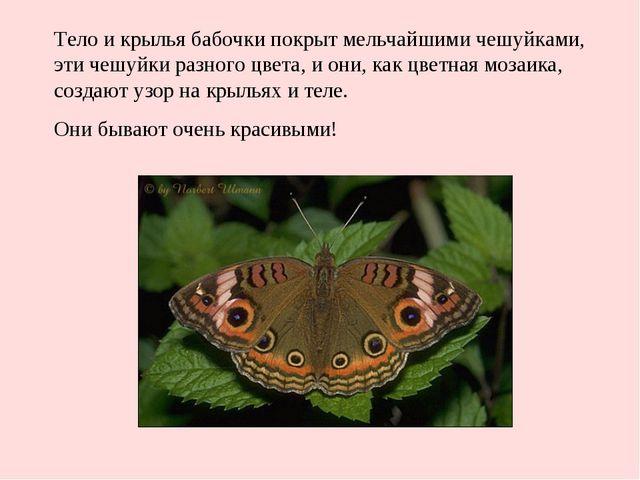 Тело и крылья бабочки покрыт мельчайшими чешуйками, эти чешуйки разного цвета...