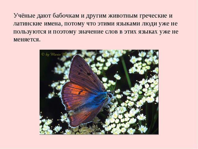 Учёные дают бабочкам и другим животным греческие и латинские имена, потому чт...