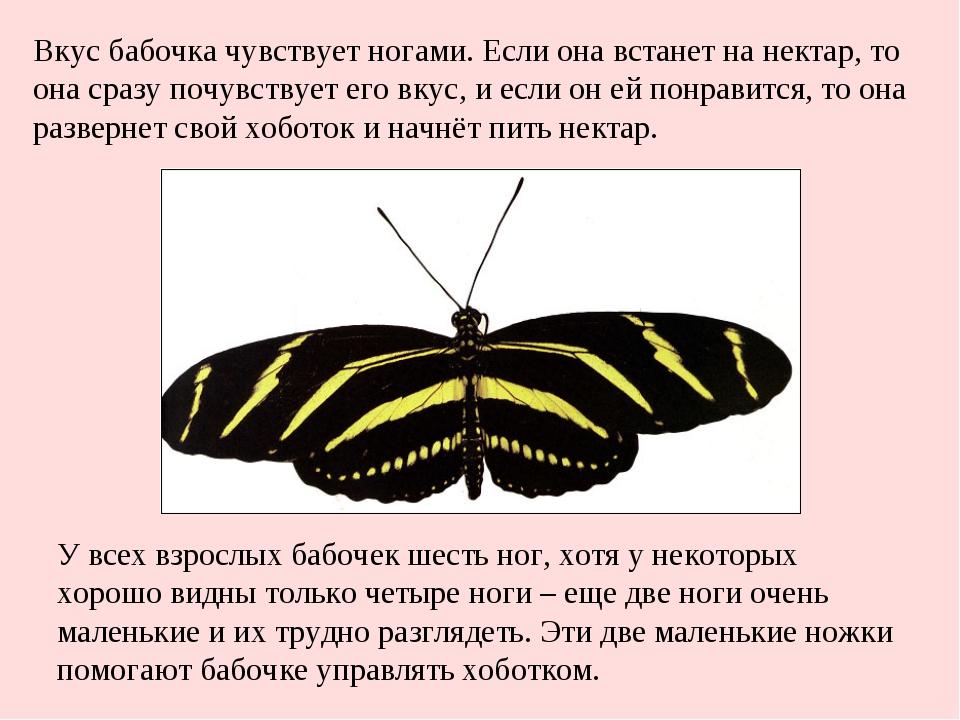 У всех взрослых бабочек шесть ног, хотя у некоторых хорошо видны только четыр...
