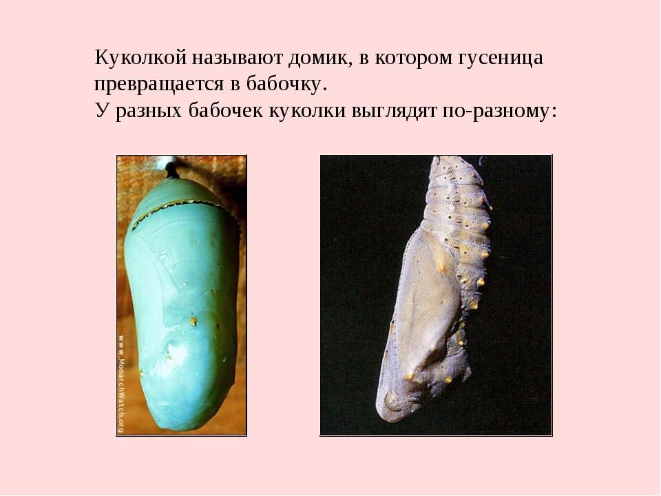 Куколкой называют домик, в котором гусеница превращается в бабочку. У разных...