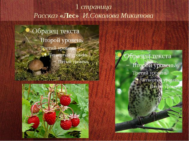1 страница Рассказ «Лес» И.Соколова Микитова