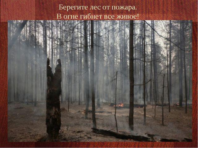 Берегите лес от пожара. В огне гибнет все живое!