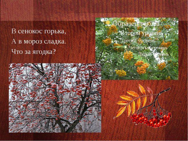 В сенокос горька, А в мороз сладка. Что за ягодка?