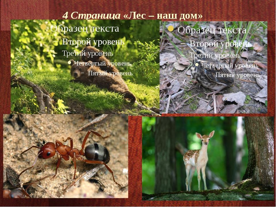 4 Страница «Лес – наш дом»