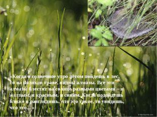 «Когда в солнечное утро летом пойдешь в лес, то на полях, в траве, видны алма